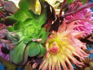 succulents_dahlias