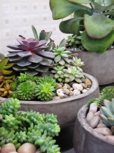 Succulent bowls, featured inside the NEOflora shop. The consumer interest in living arrangements is on the rise.